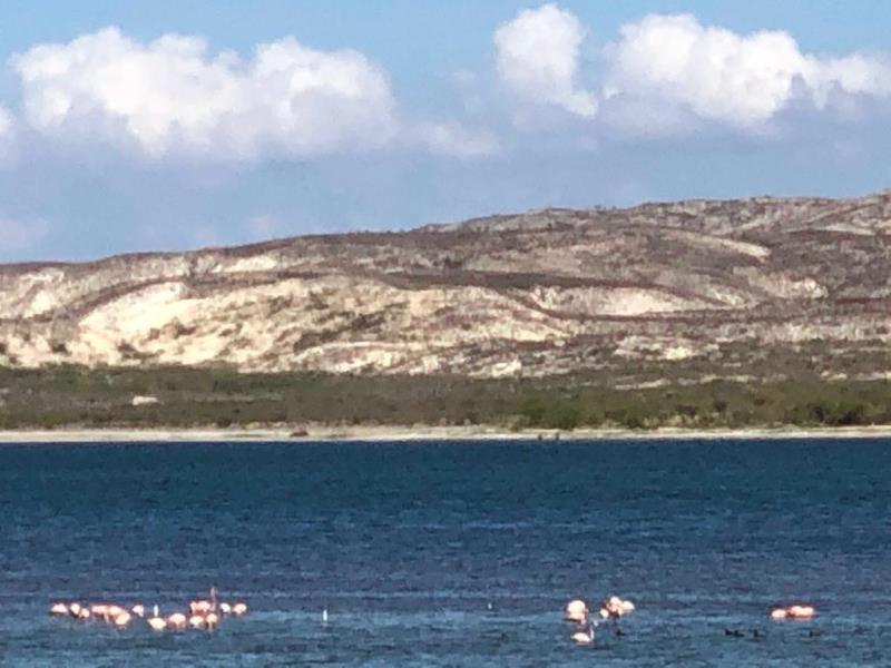 Flamingos bei der Laguna de Oviedo