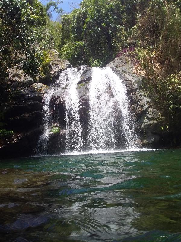 Fish Dunns Falls